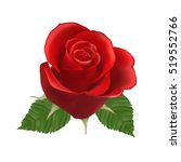 blooming red rose  vector ... | Shutterstock .eps vector #519552766