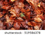 Undergrowth In An Autumn Forest