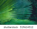 palm leaves dark green... | Shutterstock . vector #519614512