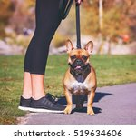a french bulldog enjoying a... | Shutterstock . vector #519634606