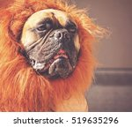 a large bull mastiff boxer in a ... | Shutterstock . vector #519635296