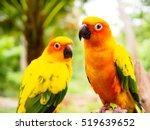 Sun Parakeet Or Sun Conure  Th...
