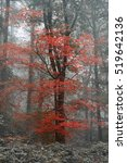 Small photo of Surreal alternate color fantasy Autumn Fall forest landscape conceptual image