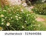 beautiful vintage garden.    Shutterstock . vector #519644086