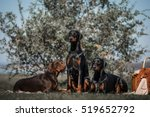 Doberman Outdoor Session...