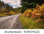 Forest Trail Through Kielder...