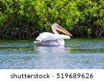 mature pelican on water  danube ... | Shutterstock . vector #519689626