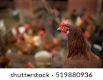 Free Range Chicken On A...