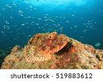 Scorpionfish Fish On Coral Reef