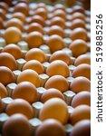 eggs on a poultry farm   Shutterstock . vector #519885256