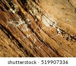Small photo of Macro Shot of Actinomycete Webbing on Uprooted Tree
