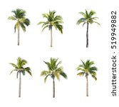coconut trees on white... | Shutterstock . vector #519949882