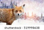 Close Red Fox Portrait In...