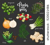 spices and herbs vector set to... | Shutterstock .eps vector #520021486
