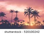 copy space of tropical palm... | Shutterstock . vector #520100242