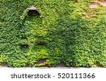 Brick Wall Covered With Ivy An...