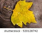 bright colourful autumn leaf... | Shutterstock . vector #520128742