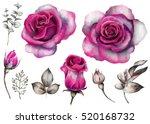 set vintage watercolor elements ...   Shutterstock . vector #520168732