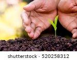 men hands are planting the... | Shutterstock . vector #520258312
