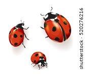 Ladybird  Ladybird Illustratio...