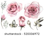 Stock photo set vintage watercolor elements of pink rose collection garden flowers leaves illustration 520336972