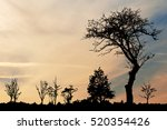 Sunset Sky With Silhouette Of...