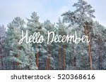 Hello December  Winter  Card