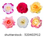 Roses Flower Collection Set Of...