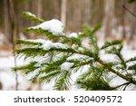 Fir Brunch Under The Snow