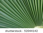 Small photo of actinomorphic leaf