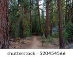 Pohono Trail In The Forest ...