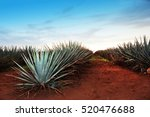 Agave Tequila Landscape To...