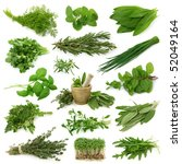 fresh herbs collection isolated ... | Shutterstock . vector #52049164