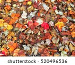 colorful dry fall leaves on the ... | Shutterstock . vector #520496536