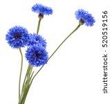 Blue Cornflower Herb Or...