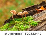 Forest Mushrooms In The Grass....