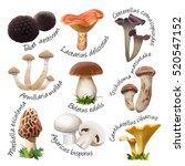 collection of various species ... | Shutterstock .eps vector #520547152