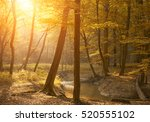 autumn forest in sunset | Shutterstock . vector #520555102