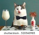 cat tongue lick lips with milk...   Shutterstock . vector #520560985