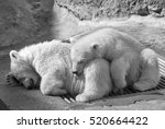 Sweet Sleeping Of Two Polar...