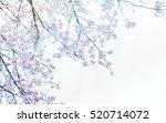 soft blurred of sakura flower... | Shutterstock . vector #520714072