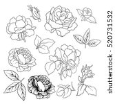 rose flower set. vector... | Shutterstock .eps vector #520731532