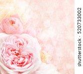 summer blossoming roses... | Shutterstock . vector #520733002