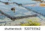 Small photo of People collect seaweed plantations algal - Nusa Penida, Bali, Indonesia.