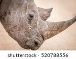 side profile of a black rhino... | Shutterstock . vector #520788556