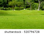Stock photo free space greensward and tree in the park and slope white rabbit doll 520796728