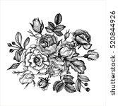 vintage vector floral... | Shutterstock .eps vector #520844926