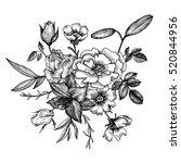 vintage vector floral... | Shutterstock .eps vector #520844956