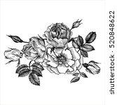 vintage vector floral... | Shutterstock .eps vector #520848622