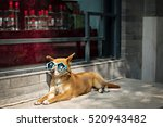 Stock photo dog in funny sunglasses situated on a sidewalk 520943482